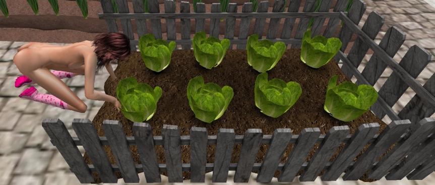 lettuce_001b
