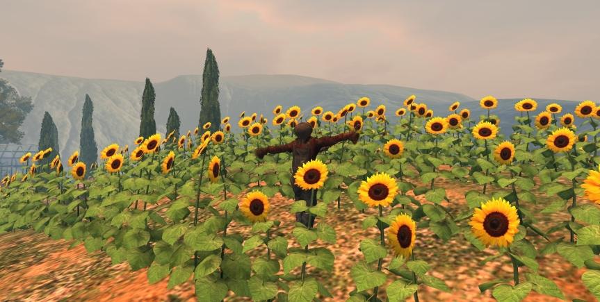 mandy-sunflowers_001b